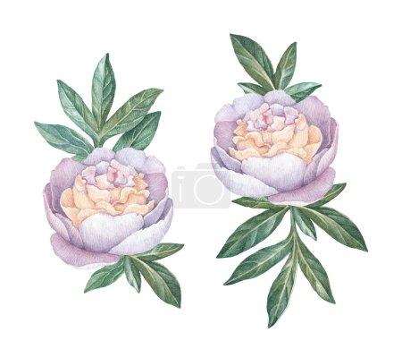 Photo pour Fleurs de pivoine aquarelle isolés sur fond blanc - image libre de droit