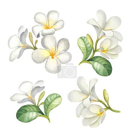 Photo pour Illustrations aquarelle de fleurs tropicales - image libre de droit
