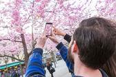 Hipster pár fotografování Třešňové květy ve Stockholmu