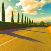 Asphalt Road and Cypresses at Sunset