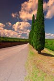Hill of Tuscany with Vineyards and Cypresses