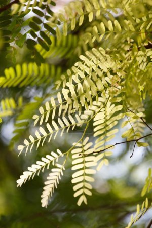 Photo for Green summer tree branches, close-up - Royalty Free Image