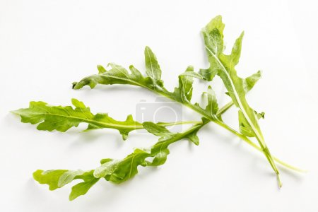 fresh green arugula leaves