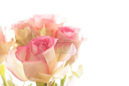 Foto de Closeup de hermosas rosas rosadas - Imagen libre de derechos
