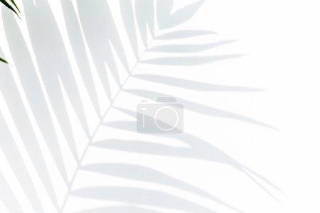 Photo pour Ombre de feuille de palmier sur fond blanc - image libre de droit