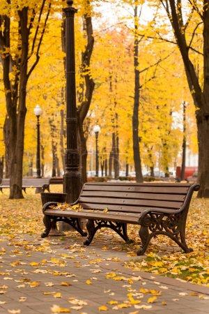 Photo pour Banc vide dans le parc d'automne - image libre de droit