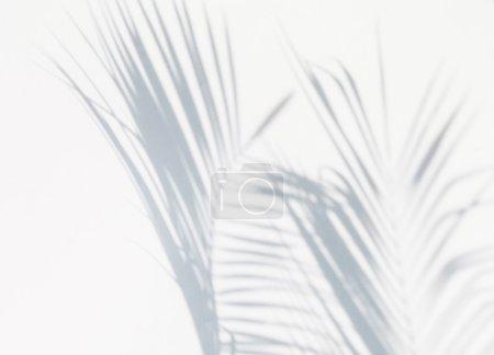 Shadow of palm leaf