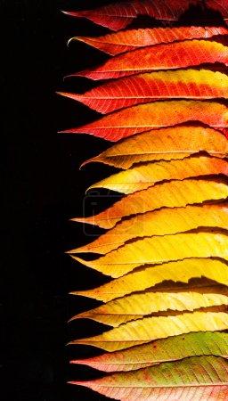 autumn orange leaves