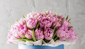 Krásné růžové tulipány