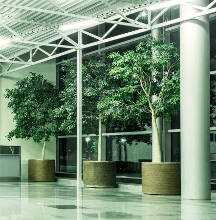 Photo for Floor potted trees in interior - Royalty Free Image