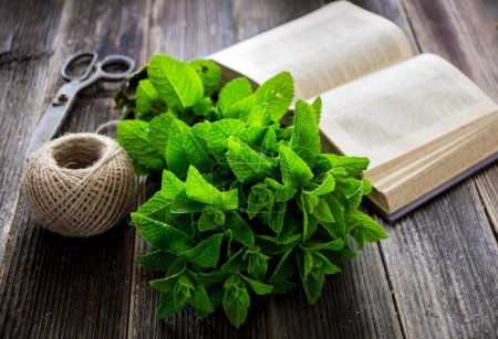 Fresh, green mint with open book