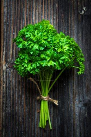 Fresh green parsley bunch