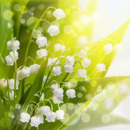 Lily-of-the-valley flovers and sunlight