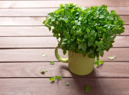 Photo for Fresh green basil on a wooden background - Royalty Free Image