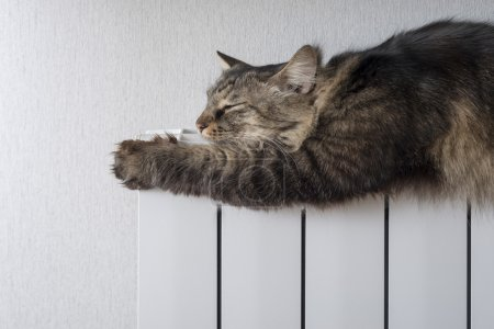 Photo for Tabby cat lying a warm radiator - Royalty Free Image