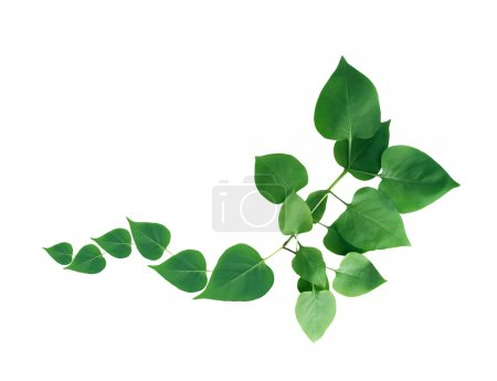 Photo for Nature concept. Nice border made from twigs with green leaves - Royalty Free Image