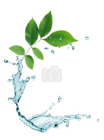 Photo pour Concept d'écologie. Composition abstraite avec feuilles vertes et gouttes d'eau - image libre de droit