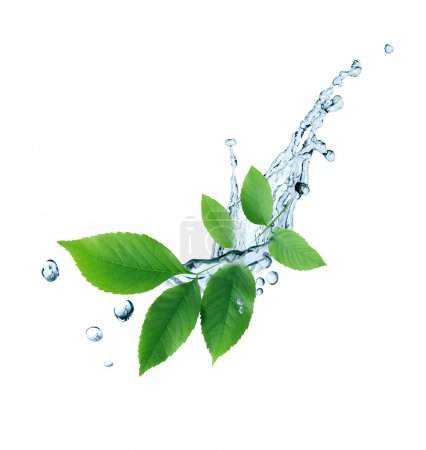 Photo for Ecology symbol. Nice twig with green leaves and water drops on white background - Royalty Free Image