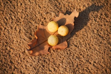 Dry leaf with abstract yellow balls on sand...