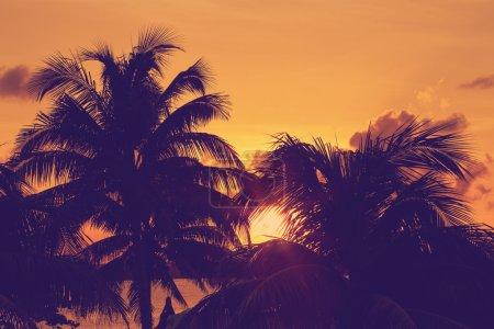 Sunset through palm tree silhouette