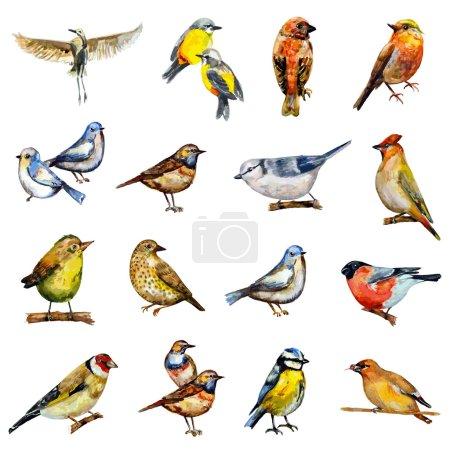 Illustration pour Collection d'oiseaux. aquarelle peinture - image libre de droit