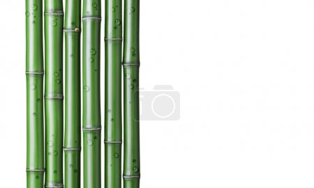 Photo pour Gros plan de bambou vert chinois - image libre de droit