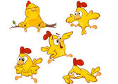 Vector illustration of a set of cute cartoon yellow chickens