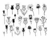 Agrimony plants collection sketch for your design