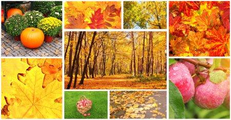 Photo pour Collection de photos avec feuilles d'automne et pommes - image libre de droit