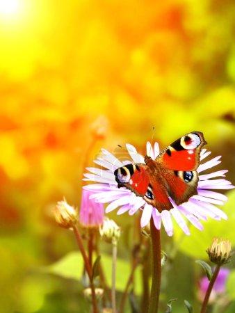 Photo pour Papillon lumineux sur fleurs lilas - image libre de droit