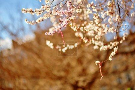 Martisor, symbol of the beginning of spring