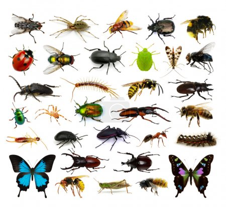 Photo for Set of insects on white - Royalty Free Image