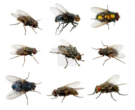 Photo for Set of insects fly on white - Royalty Free Image