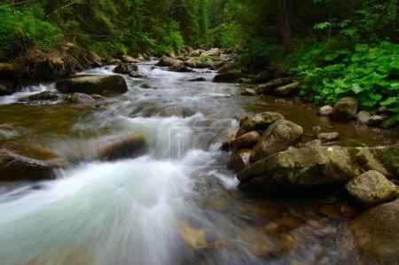 Photo pour Rivière de montagne qui coule à travers la forêt verte. Flux dans le bois . - image libre de droit