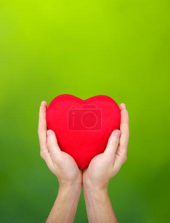 Photo pour Coeur rouge dans les mains sur fond vert - image libre de droit