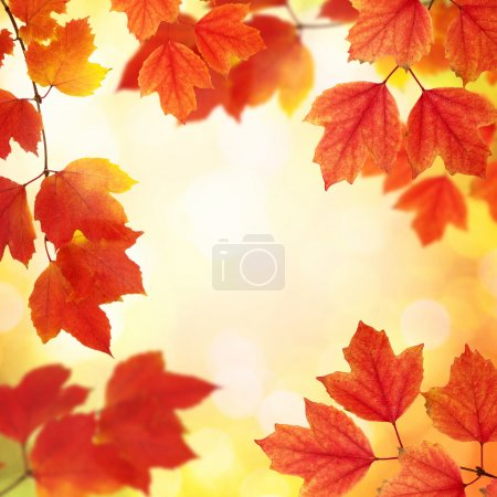 Photo for Fall, autumn, leaves background. A tree branch with autumn leaves on a blurred background - Royalty Free Image