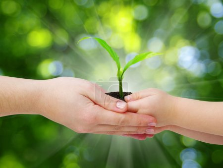 Photo for Hands of a child taking a plant from the hands of a mother - Royalty Free Image
