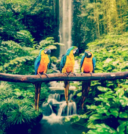 Photo for Vintage retro effect filtered hipster style travel image of Blue-and-Yellow Macaw Ara ararauna, also known as the Blue-and-Gold Macaw - Royalty Free Image