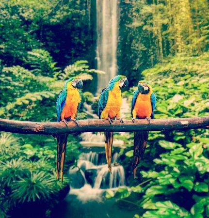 Foto de Imagen de viaje de estilo vintage retro efecto hipster filtrada de azul y amarillo guacamayo Ara ararauna, también conocido como el guacamayo azul y oro - Imagen libre de derechos