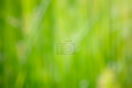 Photo for Nature blurred defocused background of green grass - Royalty Free Image