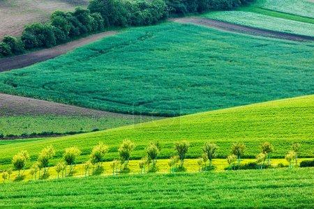 Photo pour Pommiers dans les champs vallonnés de Moravie du Sud, République tchèque - image libre de droit
