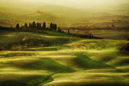 Wavy fields in Tuscany
