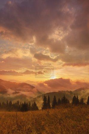 Photo pour Été brillant matin brumeux paysage avec brume, golden meadow et le soleil brille - image libre de droit