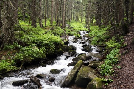 The forest Carpathian Mountain creek, which beginn...