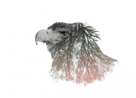 Double Exposure Portrait of Eagle and Tree Branch