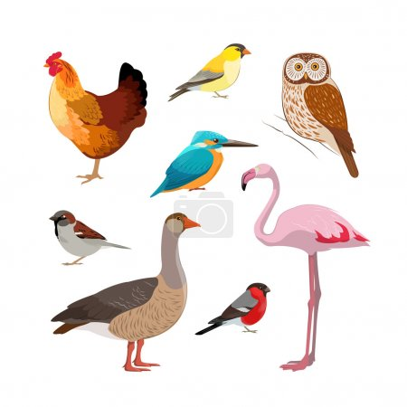 Colorful realistic bird collection