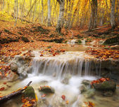 Autumn nature landscape.