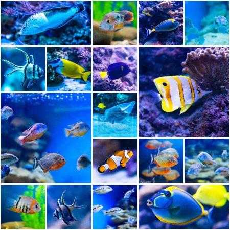 Photo pour Collage de photos de poissons colorés dans le monde de l'eau salée de l'aquarium - image libre de droit