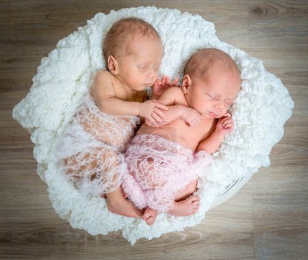 newborn twins  sleeping in a basket