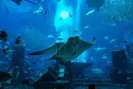 Large aquarium in Hotel